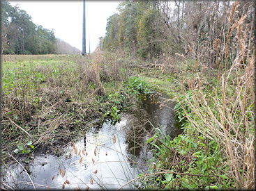 Upper portion of the creek surveyed on 1/29/2017