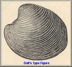 Dall's Type Figure