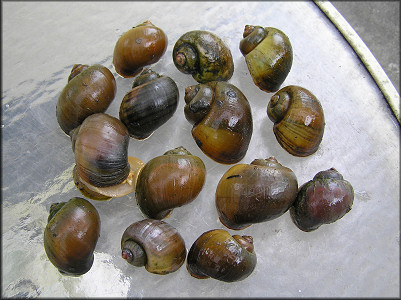 A selection of specimens from the lake and creek