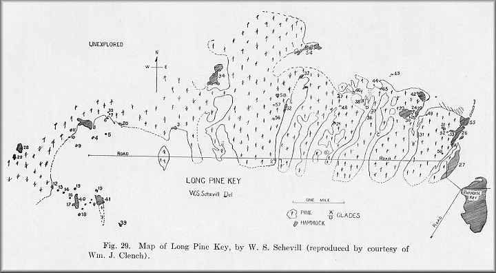 Long Pine Key Detailed Map
