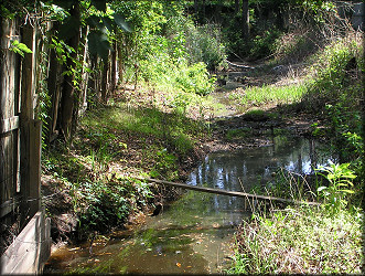 Ditch upstream from the culvert