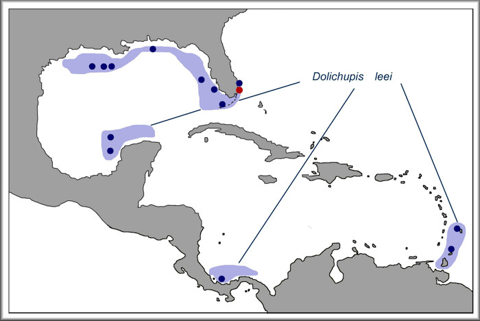 Dolichupis leei Fehse and Grego, 2010 distribution map